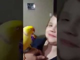 Very funny parrot talking and kissing  смешно попугай целует и говорит