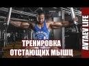 Тренировка отстающих мышц с точки зрения биомеханики Алексей Автаев Avtaev LIFE