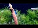 Креветочник Заселение Креветок Shrimp