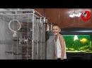"Gadająca papuga Grigorij Papuga wymyśla dziecku"" Gregory the Talking Parrot"