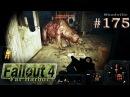 Fallout 4 Far Harbor PS4 Прохождение 175 Кинотеатр Райские Кущи