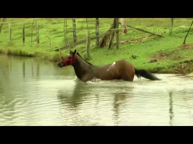 Гидротерапия при обучении лошадей / Hidroterapia para el entrenamiento de los Caballos
