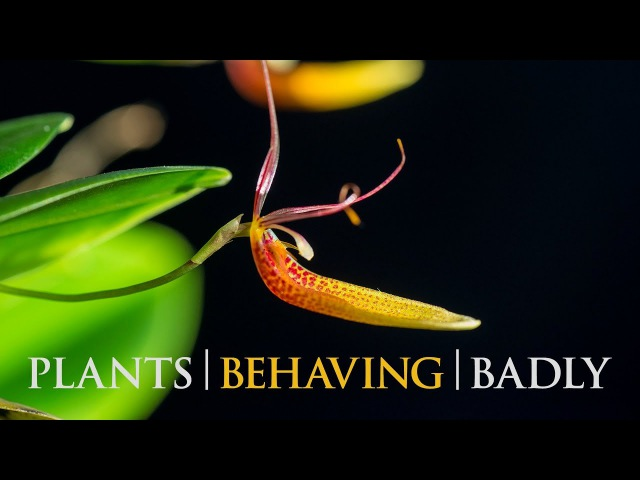 Plants Behaving Badly - Part 2 of 2 - Sex and Lies