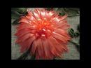 МК Хризантема вышивка лентами Chrysanthemums ribbon embroidery Легко и просто