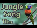 Jungle Birdsong -Sounds of Nature 8 of 59 - Pure Nature Sounds 11 Hours