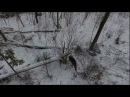 охота с лайкой на лося с квадрокоптера 3