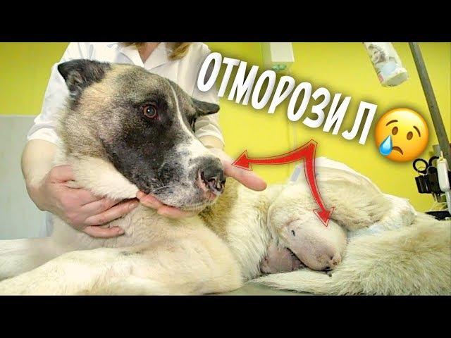 Собака замерзла в Новый год. История бездомного пса и милосердия врачей.