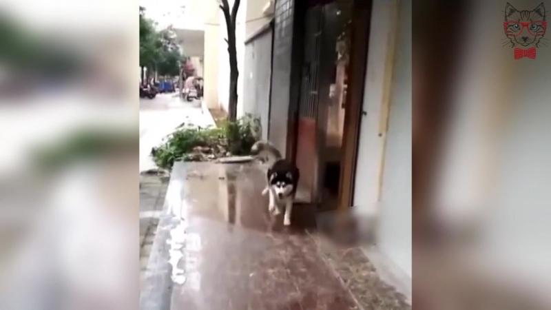 Собака Сломалась