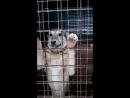 24 малюськиWhatsApp Video 2018-02-03 at 13.35.57