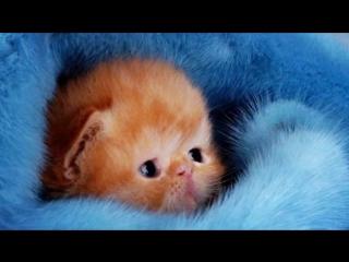 Картинки с няшными котятами