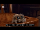 Аниматор выпустил небольшой мультфильм про паука по имени Лукас