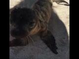 Маленький морской лев пришел поздороваться