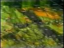 Давай за... - Клипы о чеченской войне - Видео о войне в Чечне - Чеченская война