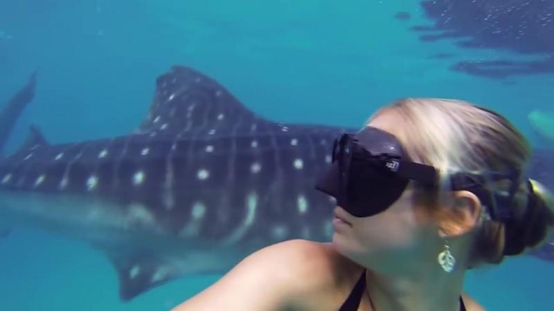 Гигантская китовая акула и хрупкая девушка HD