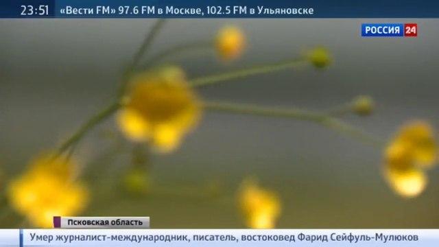 Праздник поэзии: в Михайловском Пушкина поют, читают, рисуют и играют