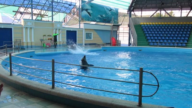 п. Небуг дельфинарий