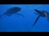 BBC Прогулки с Динозаврами - Жестокое Море (BBC Walking with Dinosaurs - Cruel Sea)(1999)