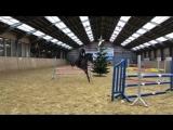 Когда лошадь думает, что она - заяц))