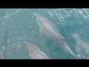 Крым Коктебель Дельфины Море