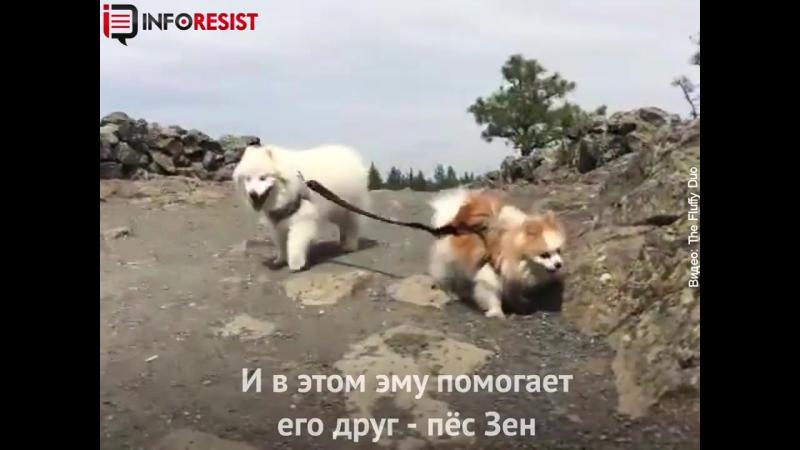 кто стал лучшим другом этой собаки, потерявшей зрение