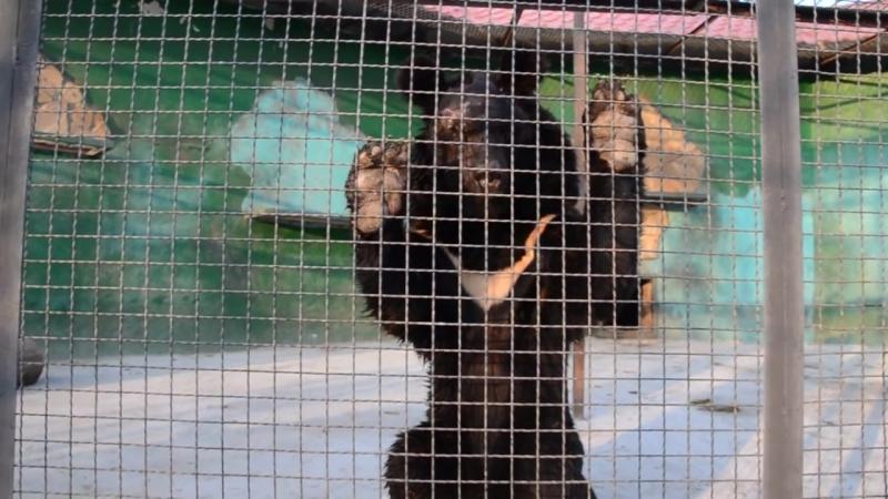 Самарский мишка Фима .Не могу смотреть без слез .Тайган .Крым