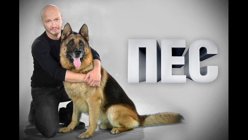 Пёс 2 сезон 6 серия ( 2015-2016 года )