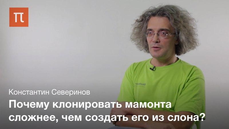 Технология клонирования животных — Константин Северинов nt[yjkjubz rkjybhjdfybz bdjnys[ — rjycnfynby ctdthbyjd