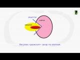 Похудеть с помощью гормонов_ Как гормоны влияют на вес