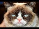 Почему животным счастье не нужно? Андрей Курпатов на QWERTY