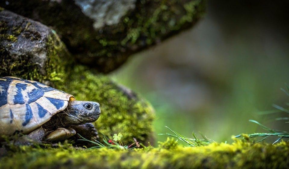 Всемирный день черепахи отметят в Савеловском