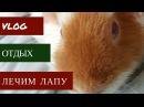 Три Морские Свинки Влог Июнь 2017
