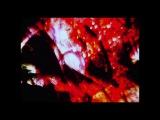 Seasons (отрывок) Фил Соломон, Стэн Брэкидж / Phil Solomon and Stan Brakhage
