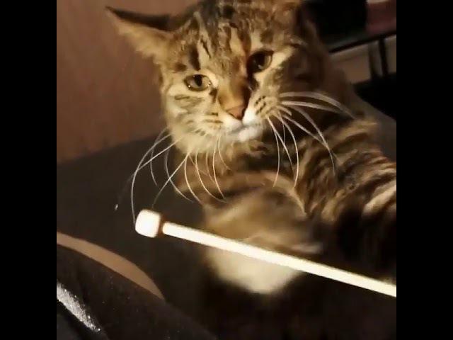 2776). 09.09.2017 - Кошечка Лекси уехала домой (видео из дома)