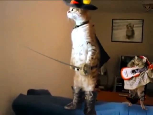 Zorro cat - hero cat.