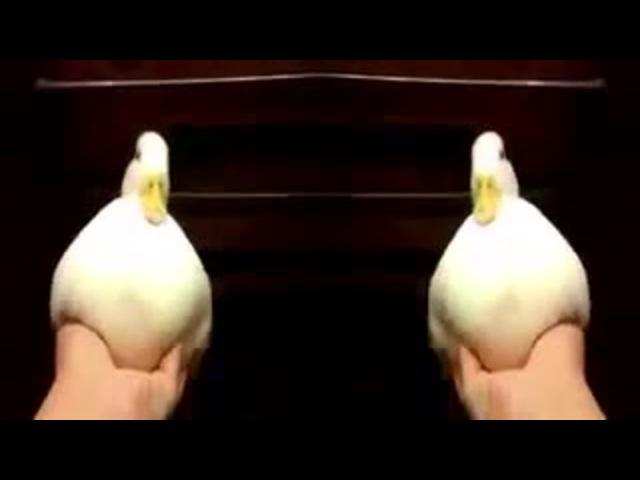 Ducky! Yay