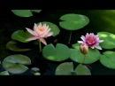 Ведическая волшебная музыка Рага Вибрации Природы Глубинная целительная релаксация Гандхарва Веда