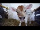 Могут ли веганы употреблять молоко?