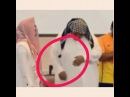 Admin 🌸Muhammad🌸 on Instagram ummamuhammadatjk @ Подписывайтесь на нашу интересную ИСЛАМСКУЮ группу ❤☝️✔🌹🌸💐🍁 islom musulman