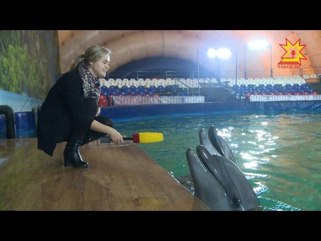 Шоу Черноморских дельфинов в этнокомплексе Амазония