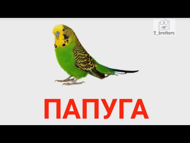 Картки Домана Українською ПТАХИ