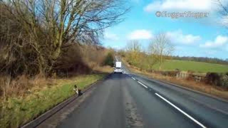 Dashcam Footage Of Bird Of Prey Stooping to Catch Its Prey