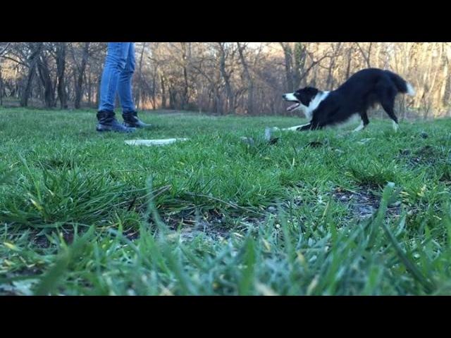 Nightwolf_669 video