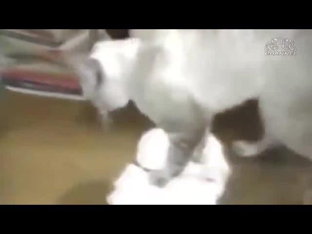 Wild cat sex