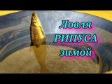 Ловля рыбки рипуса зимой
