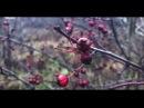 БонМузыка Осень или предвкушая вкус снега с замерзших рукавиц