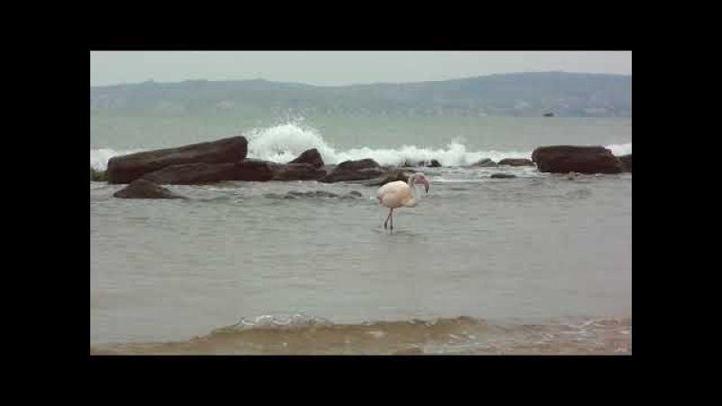 Розовый Фламинго - Феодосия 19 Марта 2018 00036