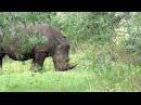 Африканская большая пятерка Кения Танзания