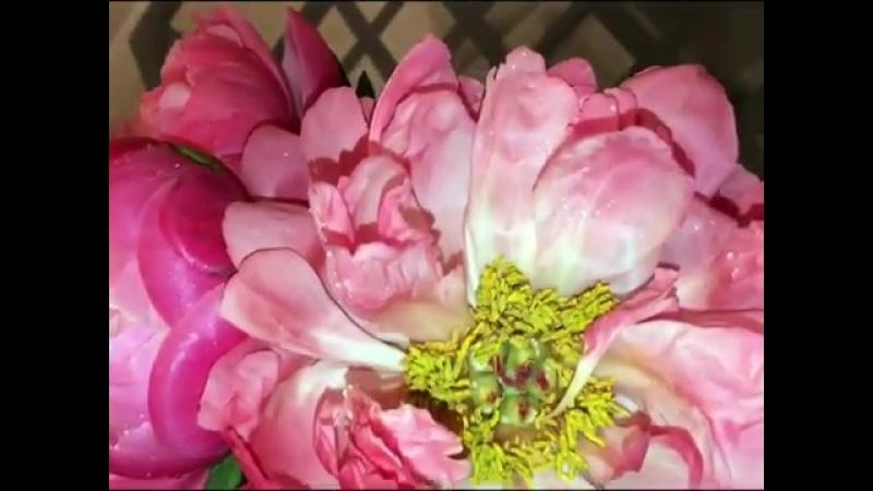 Это самые удивительные цветы ,которые мне только дарили😍😍😍Распустились за 5 минут и сменили цвет уже три раза 😱💘💘💘