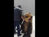Когда твой лучший друг это медведь
