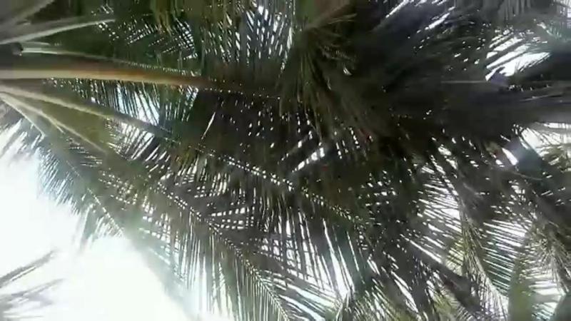 Путешествие с LR - солнечная Доминикана